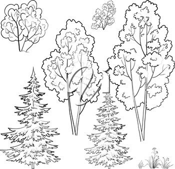 Plants, trees and flowers, monochrome contours on a white background. Vector