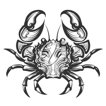 Crab Engraving illustration in retro style. Seafood element for menu decor or company label. Hand drawn illustrations isolated on white background
