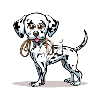 Dalmatian puppy with dog lead in his mouth. Good for Pet Club emblem. Isolated on white background.