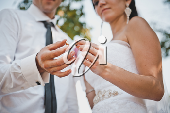 Wedding rings in hands of the newly-married couple.