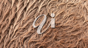 Brown camel wool close-up, textured background