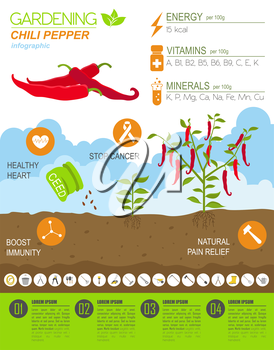 Gardening work, farming infographic.Chili pepper. Graphic template. Flat style design. Vector illustration