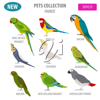 Parrot breeds icon set flat style isolated on white. Pet birds collection. Create own infographic about pets. Vector illustration