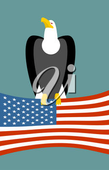 Bald eagle and American flag. USA national symbol of bird. Large birds of prey and flag state
