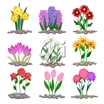 Garden flowers plants on soil. Vector spring gardening plant bouquets, tulip and crocus, hyacinth and chamomile on flowerbed