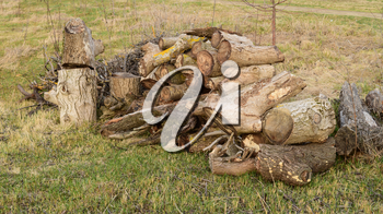 A small pile of firewood stacked. Old Hemp, affected by fungi and lichen. Firewood for baths and fires.
