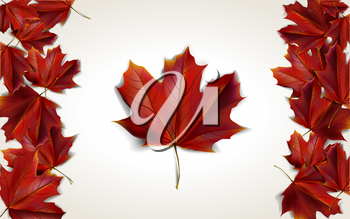 Maple leaves placed in form of Canadian flag, vector illustration