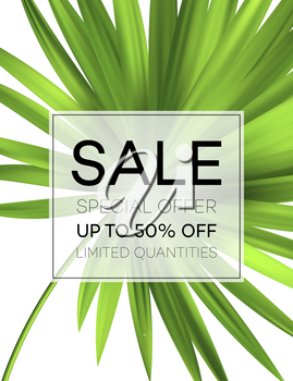 Sale banner or poster with palm leaves and jungle leaf. Floral tropical summer background. Vector illustration EPS10