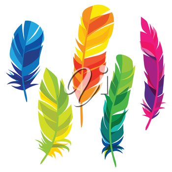 Set of abstract bright transparent feathers on white background.