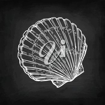 Scallop. Chalk sketch on blackboard background. Hand drawn vector illustration. Retro style.