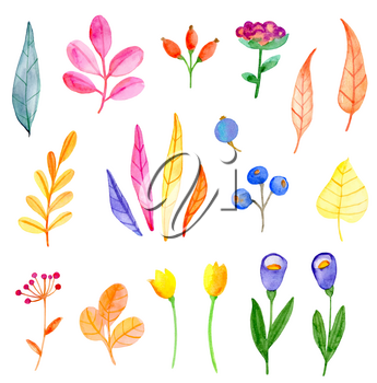 Set of vector watercolor flowers and leaves on a white background. Hand drawn botanical autumn design elements