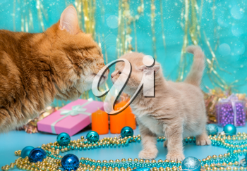 Small British kitten and adult cat on the background of Christmas decorations