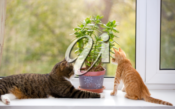 Big and little cat sitting on the window sill