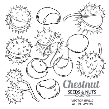 chestnut vector set isolated on white background