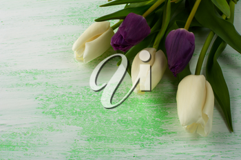 Spring tulips background. Flower frame. Flower background. Flower bouquet. Greeting card. Mothers day. Place for text. Copy space