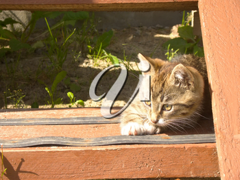 Funny little striped kitten on wooden stairs.
