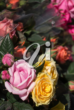 Beautiful fresh flowers as a nature background